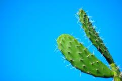 kaktus afrykańskiej Obraz Royalty Free