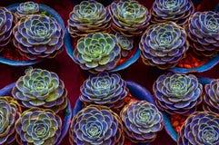 Kaktus-Anlagen Lizenzfreie Stockfotos