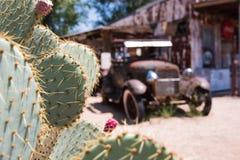 Kaktus-Ansicht in SELIGMAN, ARIZONA/USA Lizenzfreie Stockbilder