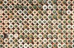 Kaktus Astrophytums-asterias stockbild