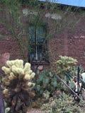 Kaktus außerhalb Adobe-Hauses Stockbilder