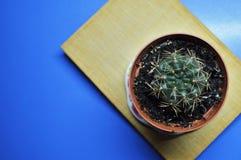 Kaktus auf dem Buch Stockbilder