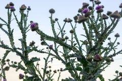 Kaktus auf dem Gebiet stockbild