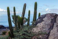 Kaktus auf dem Ozean Stockbild