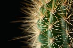 Kaktus auf einem dunklen Hintergrund Stockfotos