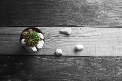 Kaktus auf einem einfarbigen Hintergrund Stockfoto