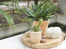 Kaktus auf einer Tabelle in einem Café lizenzfreie stockfotos