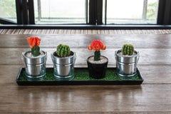 Kaktus auf hölzernem Hintergrund Stockbilder