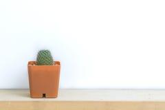 Kaktus auf Holztisch Stockbild