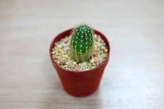 Kaktus auf Holztisch Stockfotografie