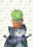 Kaktus auf Katze Lizenzfreie Stockbilder