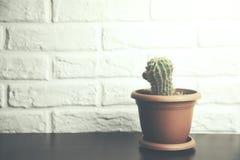 Kaktus auf Tabelle Stockfoto