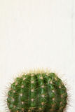 Kaktus auf weißem Hintergrund Lizenzfreie Stockfotografie