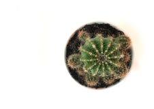 Kaktus auf weißem Hintergrund Stockbild