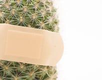 Kaktus behandelt mit bandaid Stockbild