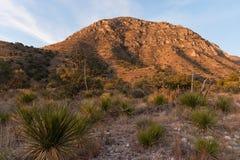 Kaktus bei Guadalupe Mountains stockbild