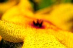 Kaktus-Blühen lizenzfreies stockfoto