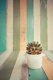 Kaktus blüht im Vase auf Retro- Weinlesehintergrund Lizenzfreie Stockfotografie