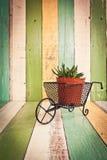 Kaktus blüht im Vase auf Retro- Weinlesehintergrund Lizenzfreies Stockbild