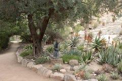 Kaktus-Blumen Stockbild