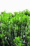 Kaktus, Bokeh Obraz Stock