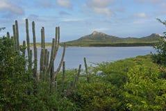 Kaktus in Bonaire Stockfotografie