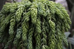 Kaktus Botanischer Garten Lizenzfreies Stockbild