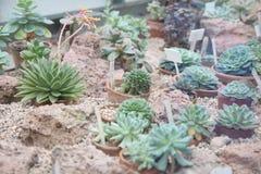 Kaktus Botanischer Garten Stockbild