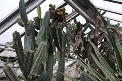 Kaktus Botanischer Garten Stockbilder