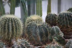 Kaktus Botanischer Garten Lizenzfreie Stockfotografie