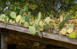 Kaktus-Dach Stockfoto