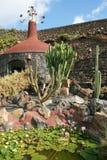 kaktus de jardin lanzarote Royaltyfria Bilder