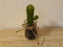 Kaktus dekorować twój dom zdjęcia royalty free