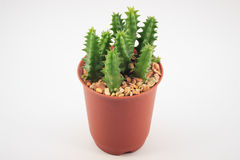 Kaktus in den Potenziometern lizenzfreie stockfotografie