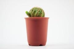 Kaktus in den Potenziometern stockbild