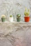 Kaktus in den Töpfen auf grauer Betonmauer Stockfotos