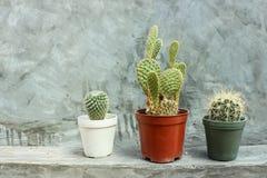 Kaktus in den Töpfen auf grauer Betonmauer Lizenzfreies Stockfoto