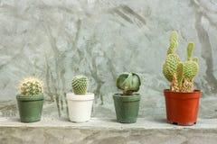 Kaktus in den Töpfen auf grauer Betonmauer Lizenzfreie Stockfotografie