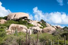 Kaktus, der auf den Ayo Rock-Bildungen wächst Lizenzfreies Stockfoto