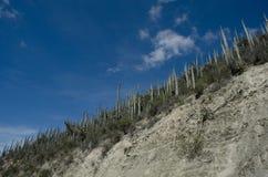 Kaktus in der Orgelpfeife Stockbild
