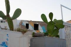 Kaktus in der Stadt lizenzfreies stockbild