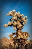 Kaktus in der Wüste, USA Lizenzfreie Stockfotos