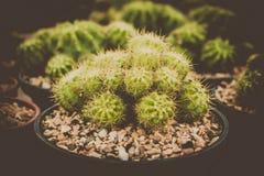 Kaktus in der Weinlesefilmart Stockbilder