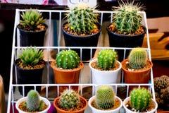 Kaktus dla sprzedaży Fotografia Royalty Free
