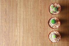 Kaktus drei auf hölzernem Papierhintergrund, topview Lizenzfreie Stockfotos