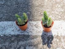 Kaktus, Dunkelheit und Licht Lizenzfreies Stockfoto
