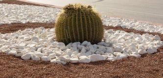 Kaktus in einem Blumenbeet Stockfotos