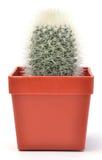 Kaktus in einem Potenziometer Lizenzfreies Stockbild