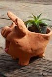 Kaktus in einem schwarzen Cup, Tonwaren, Schweine, Lizenzfreie Stockfotos