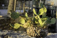 Kaktus in einem Steinglas lizenzfreie stockfotos